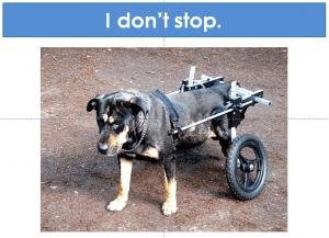 dog in wheelchair